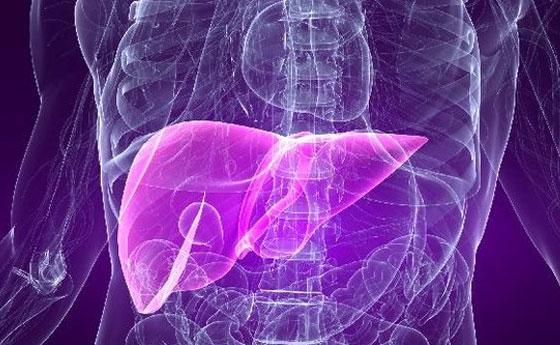 Fígado – Qual é a sua raiva?